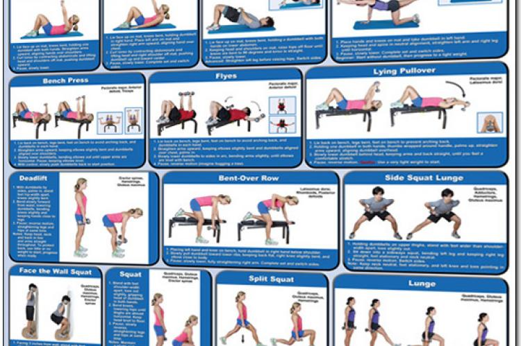 Dumbbell Exercises Poster - Lower Body, Core and Chest | HomeFit
