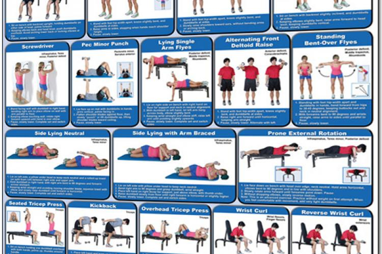 Dumbbell Exercises Poster Shoulders And Arms